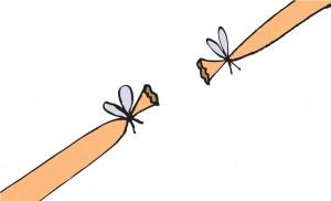 bij een vasectomie wordt de zaadleider doorgeknipt en afgebonden